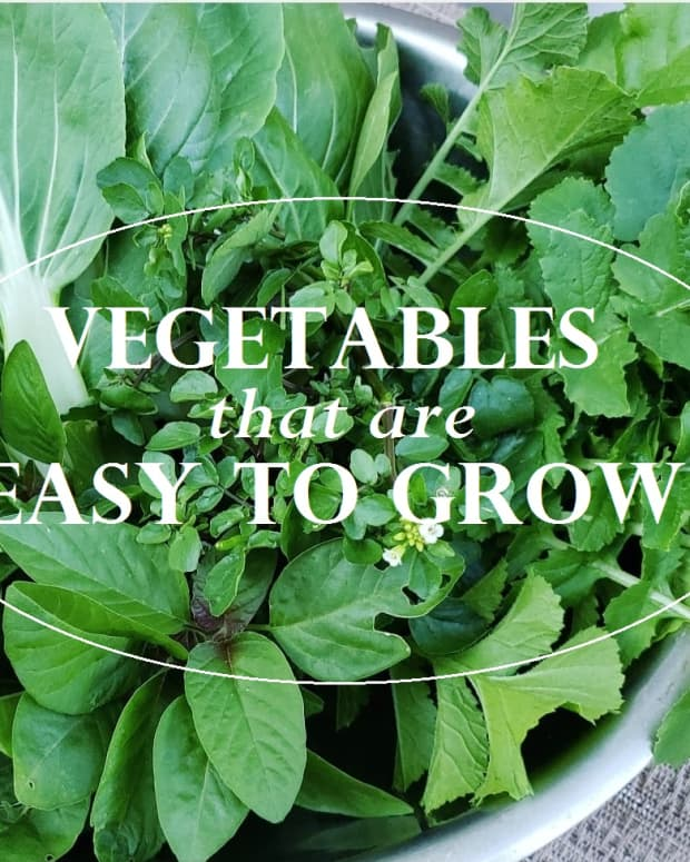 easy-to-grow-vegetables-in-containers