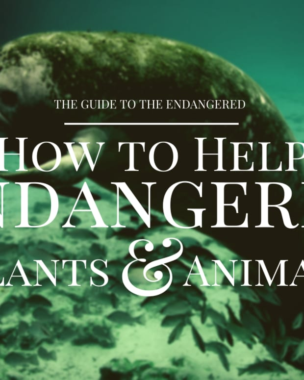 how-to-help-protect-endangered-species