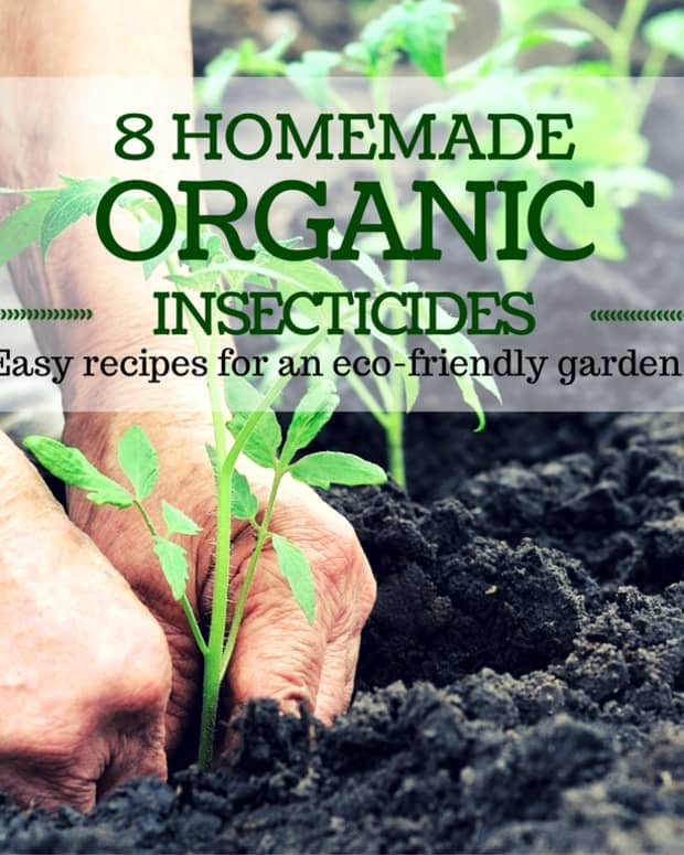 homemade-organic-insecticides