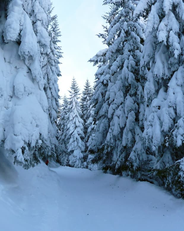 the-frozen-tree