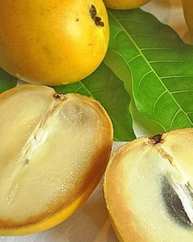 tropical-taste-of-hawaii-the-amazing-abiu