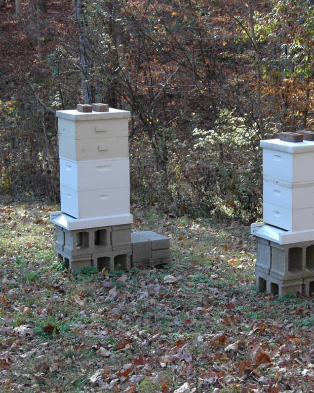 beehives-a-guide-to-choosing-the-right-size-boxes
