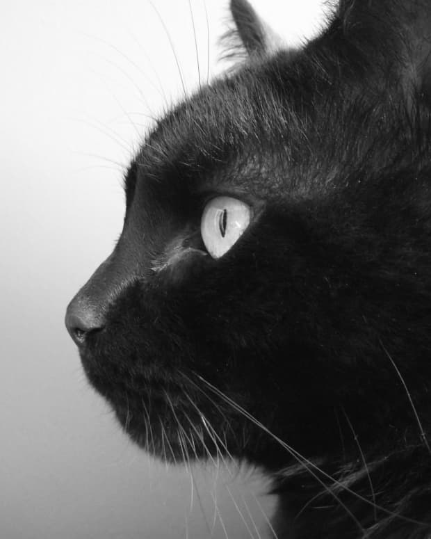 the-mystery-of-the-black-cat
