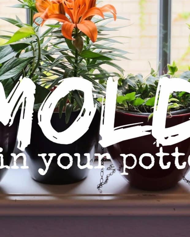 moldy-potting-soil