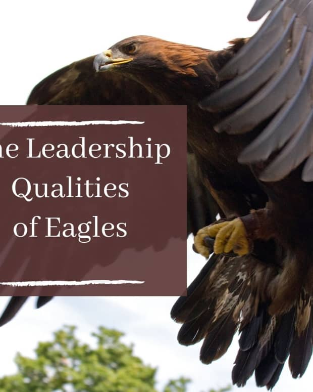 7-leadership-characteristics-of-an-eagle-that-man-should-learn-from