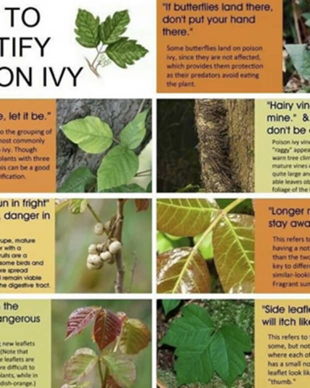 how-to-prevent-poison-ivy