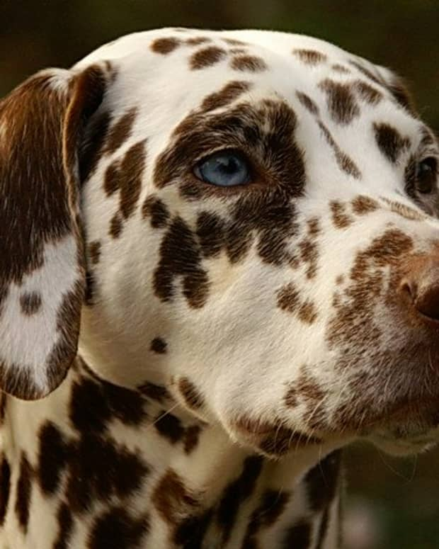 the-dalmatian-syndrome-part-2