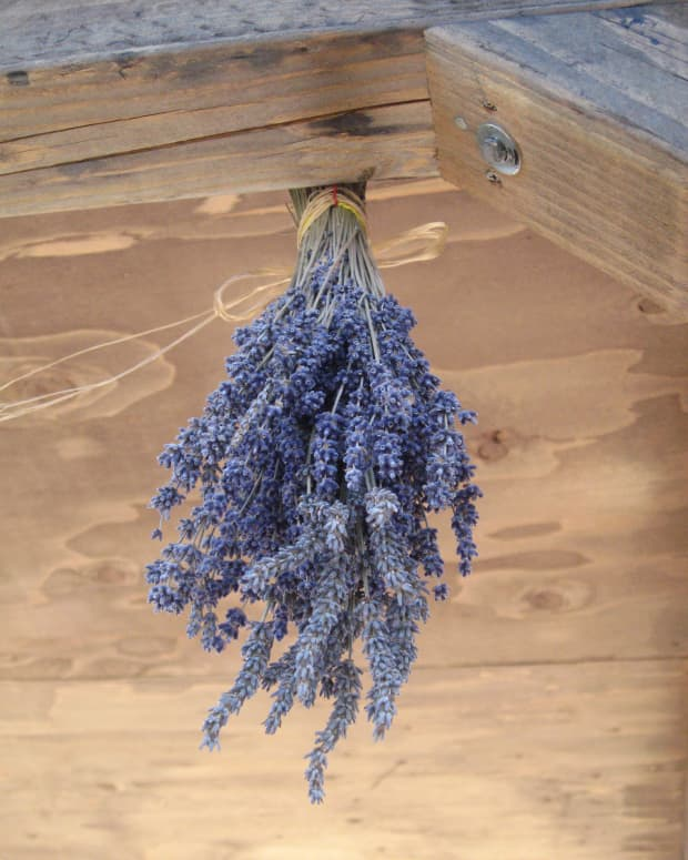 how-to-dry-homegrown-lavender