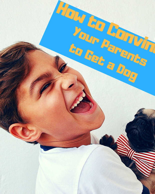 how-to-convince-your-parents-to-get-a-dog-ways-to-convince-mom-and-dad-to-bring-home-a-pet-dog