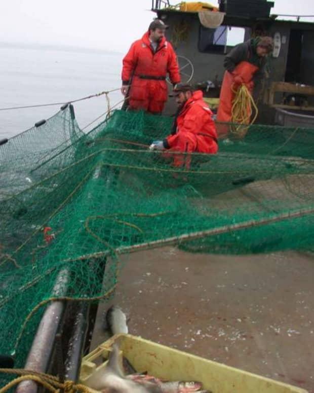 fishing-stocks-have-collapsed-around-the-world