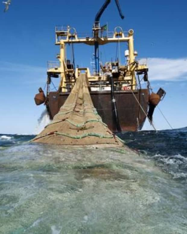 saving-west-african-fisheries