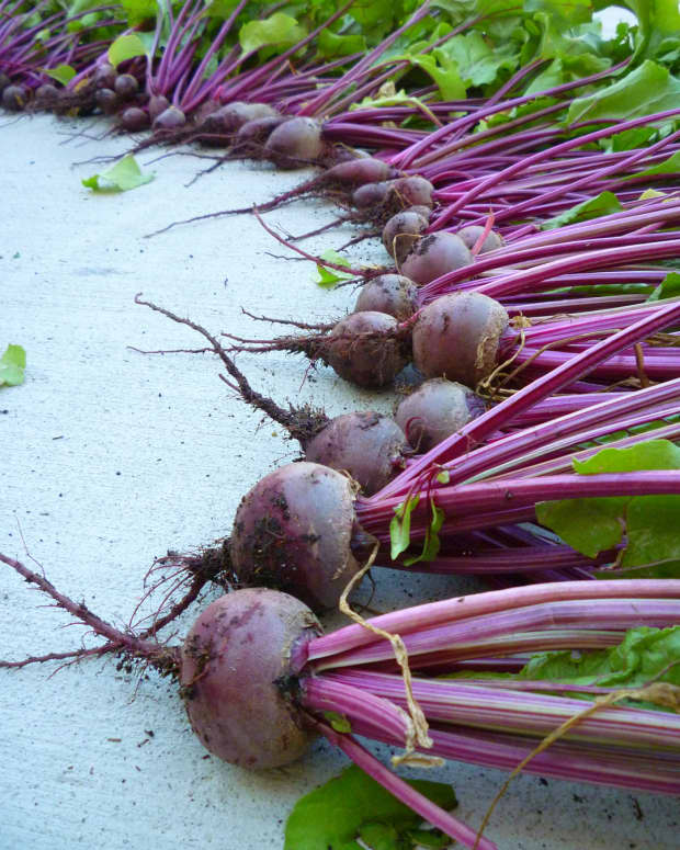 how-to-grow-beets-in-containers