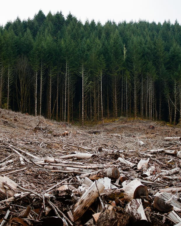 hemp-vs-trees-one-billion-reasons-to-use-hemp-instead