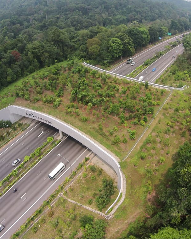 what-are-eco-bridges-and-how-do-they-help-in-biodiversity-management
