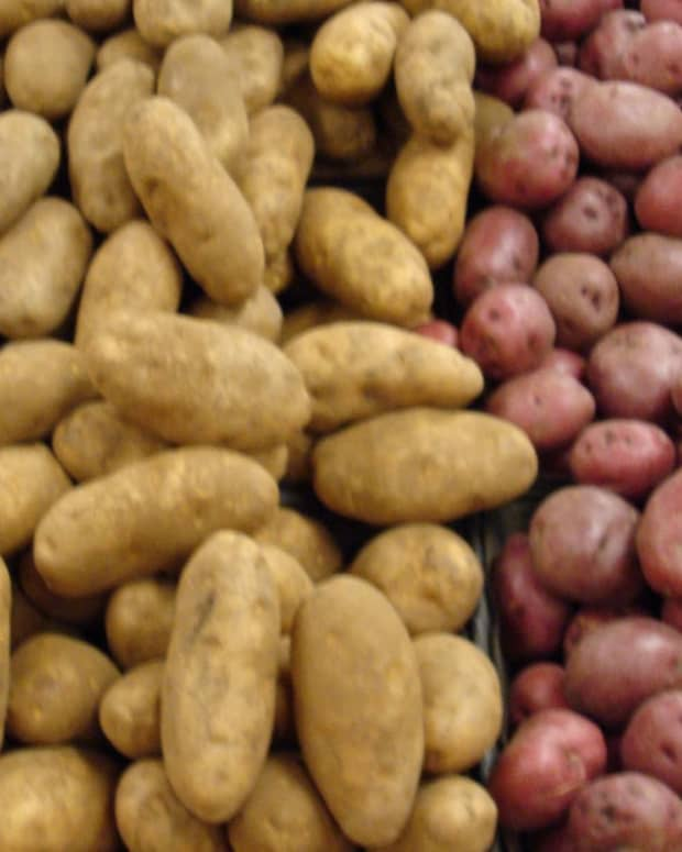 potatogrowingseedtipsstorage