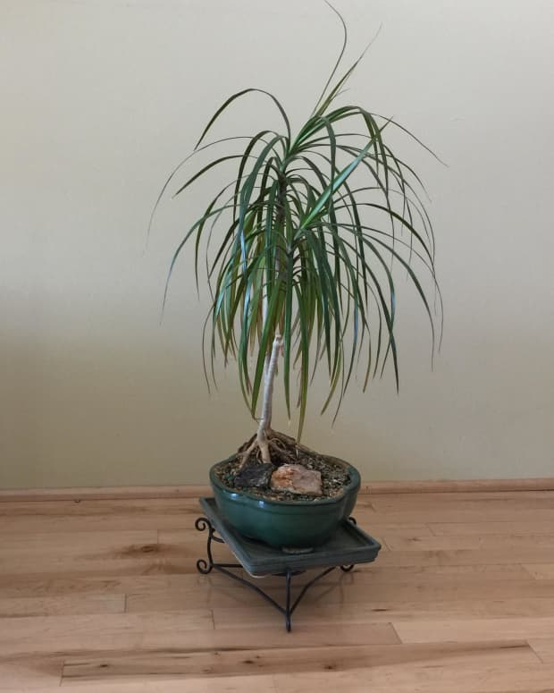 importance-rotating-houseplants