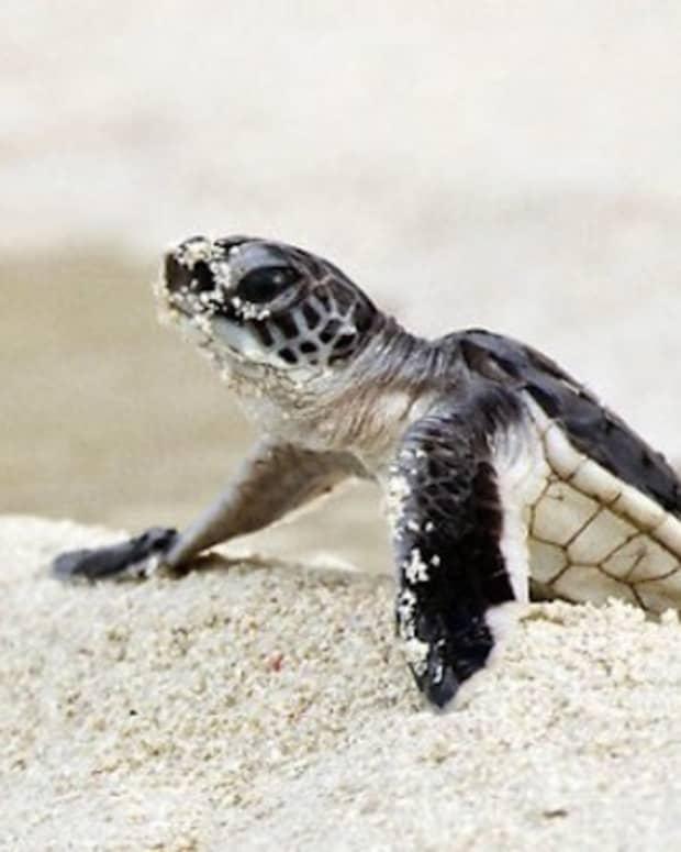 philippine-legend-the-legend-of-turtle