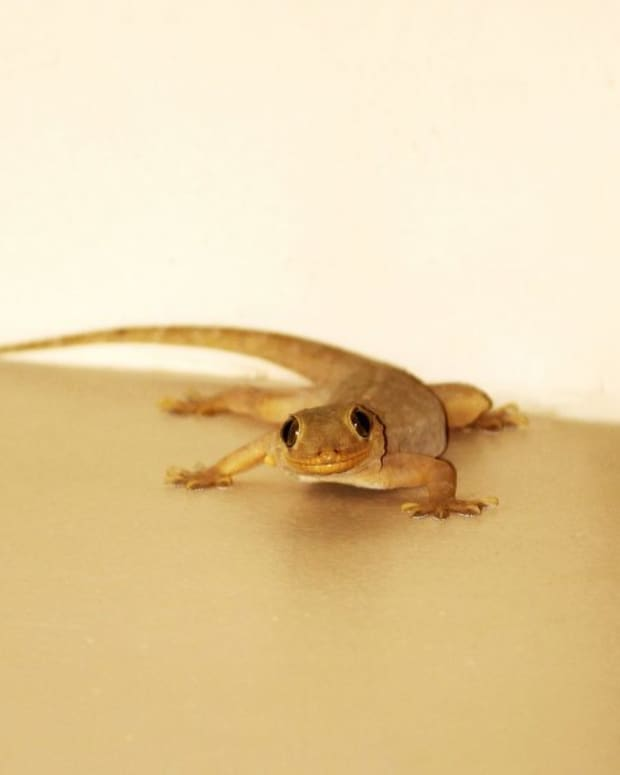 philippine-legend-the-legend-of-the-first-lizard