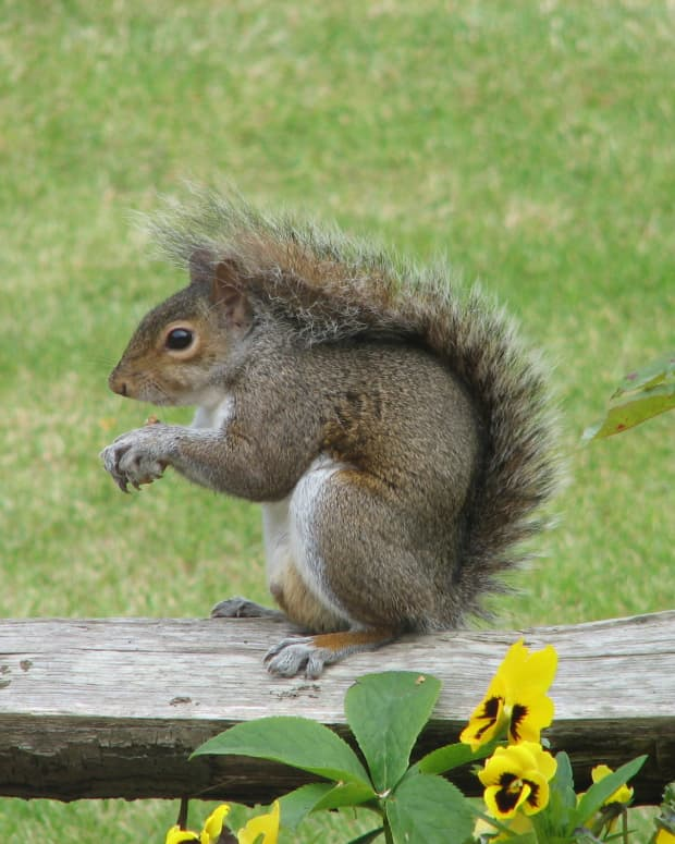 how-to-pick-ammo-for-squirrel-hunting
