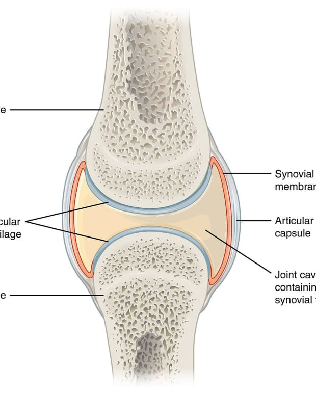 the-synovium-synovitis-inflammation-and-joint-pain