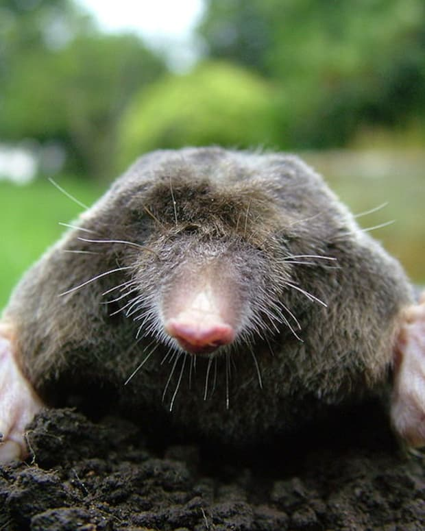 ways-to-get-rid-of-moles-from-your-garden-naturally
