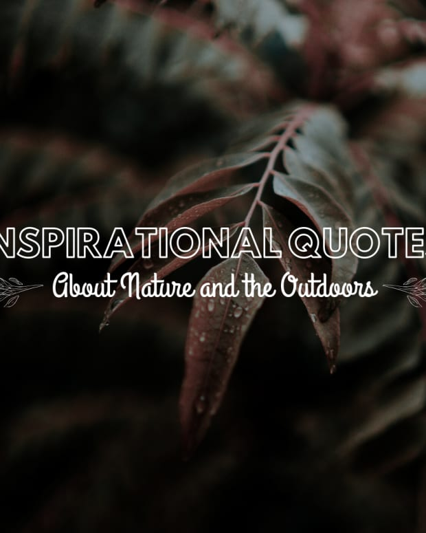 quotes-about-nature-a-collection-of-nature-quotes-for-inspiration-and-peace