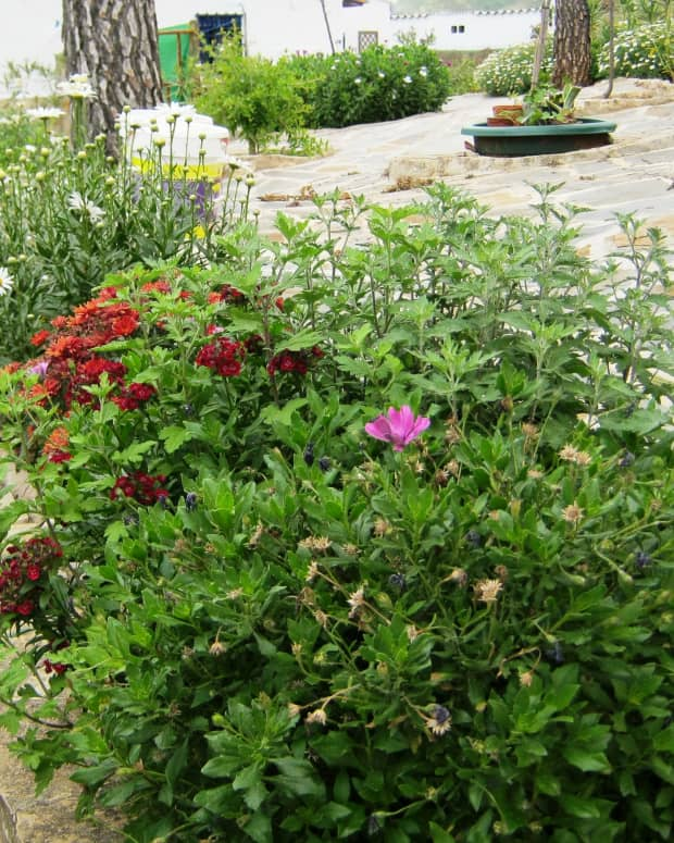 how-to-make-a-beautiful-garden-and-keep-within-your-budget