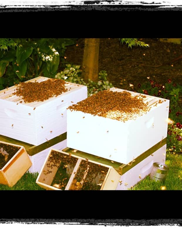 how-to-install-a-package-of-bees-in-a-new-hive