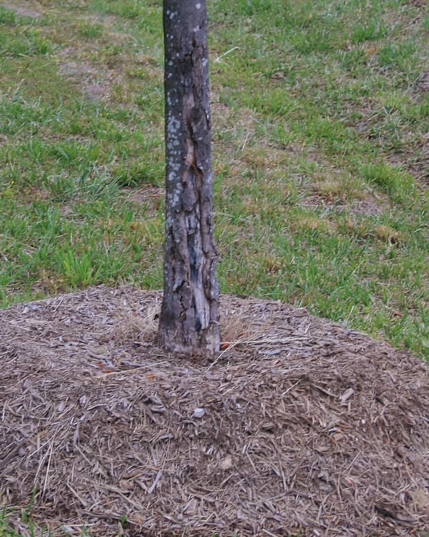 stop-the-mulch-madness-common-mulching-mistakes
