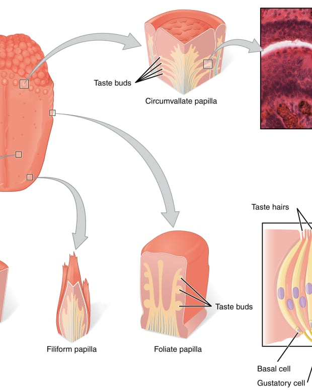 oral-health-tongue-problems