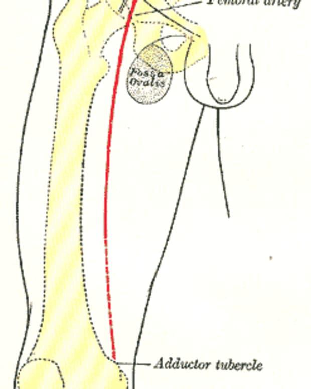 femoral-nerve-block