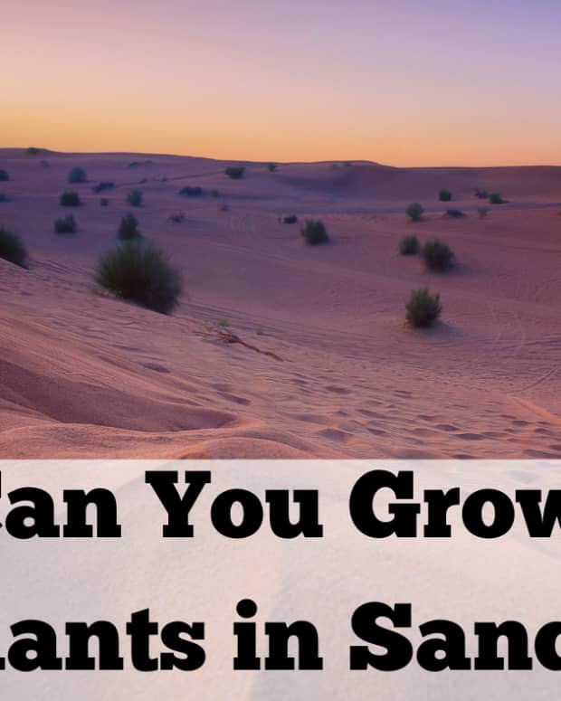 can-plants-grow-in-sand