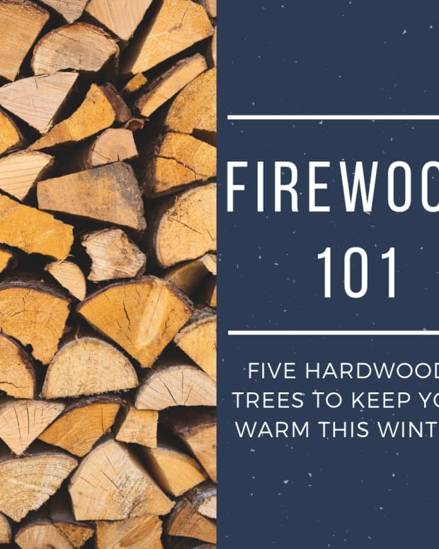 five-types-of-hardwood-for-firewood