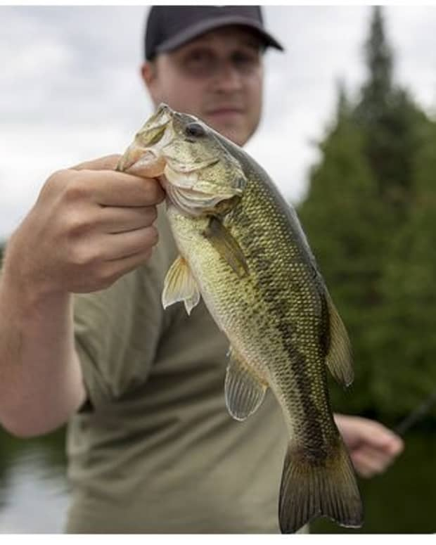 top-5-best-bass-lures