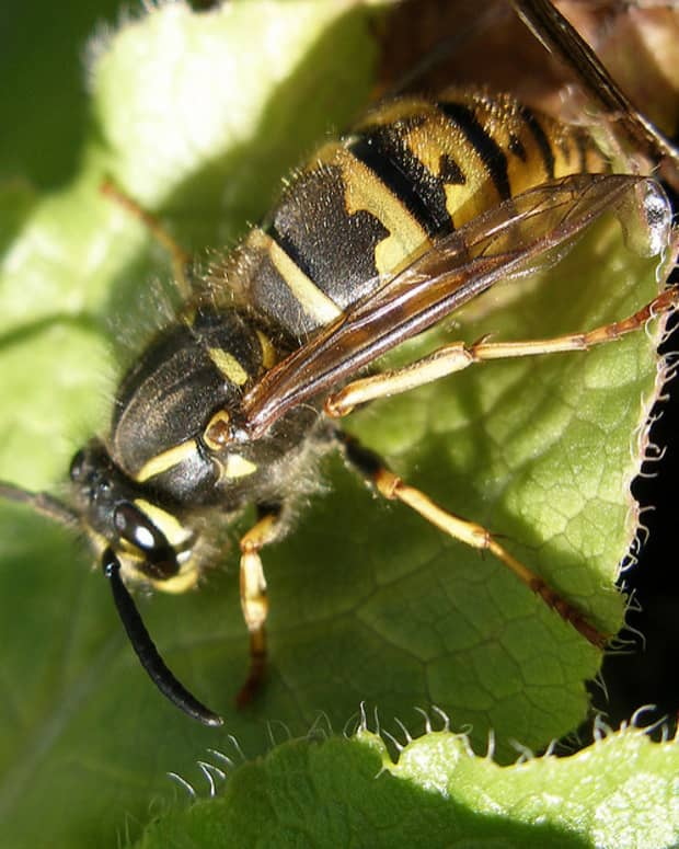 getting-rid-of-wasps