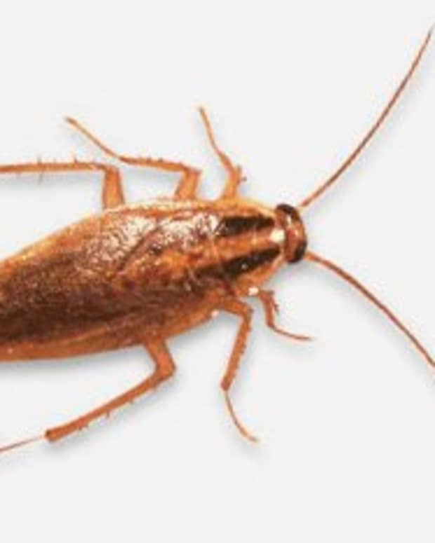 10-non-toxic-ways-to-eliminate-of-roaches