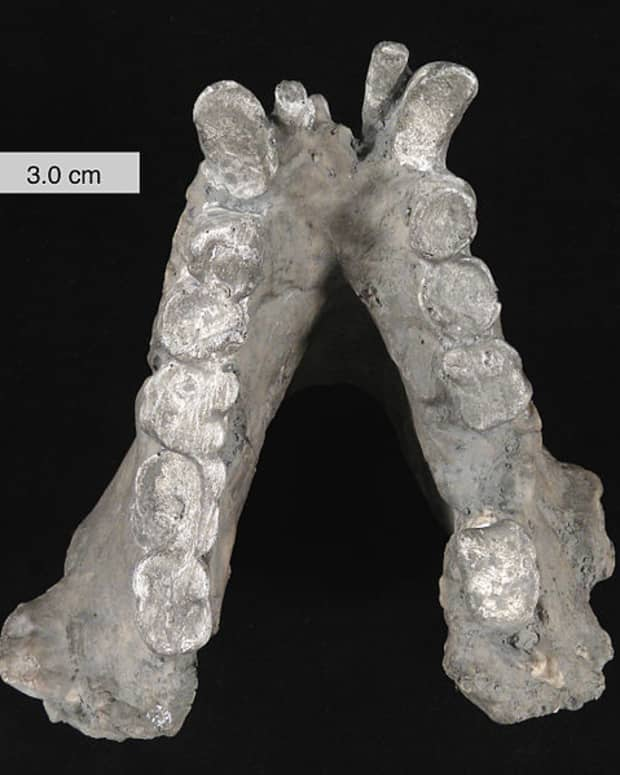gigantopithecus-blacki-the-real-bigfoot