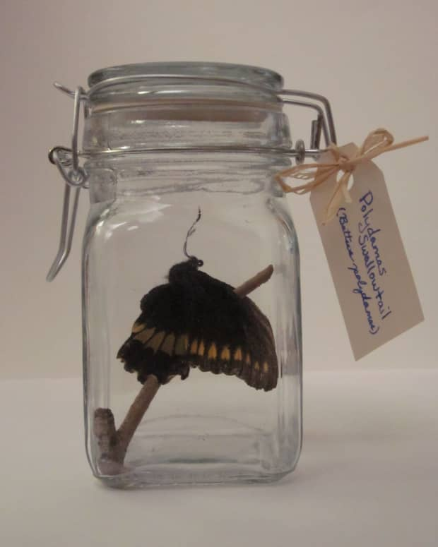 how-to-make-a-butterfly-jar
