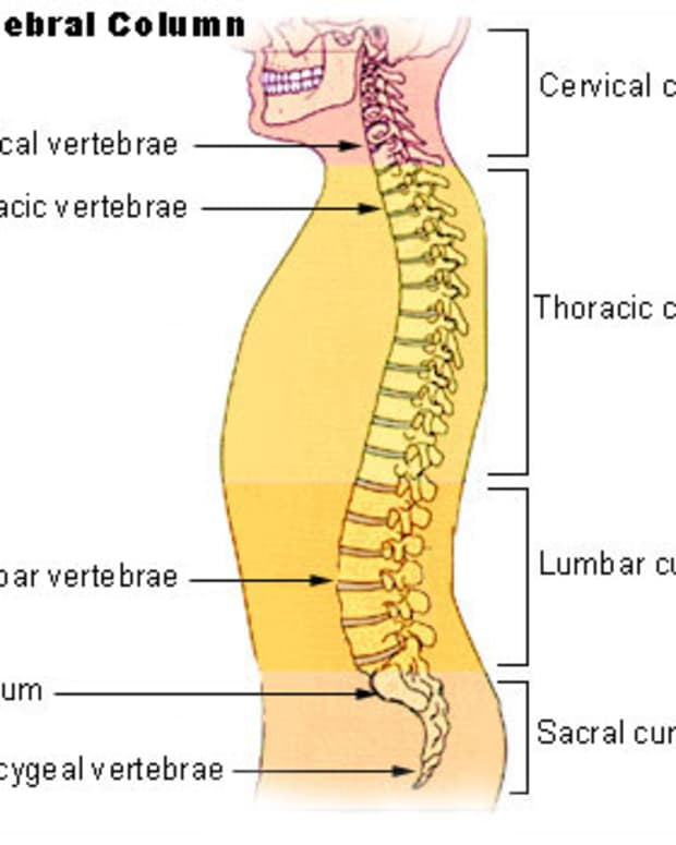 causes-symptoms-and-treatments-of-spinal-osteoarthritis