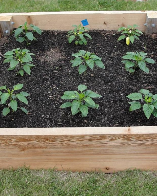 how-to-plan-a-raised-garden-bed