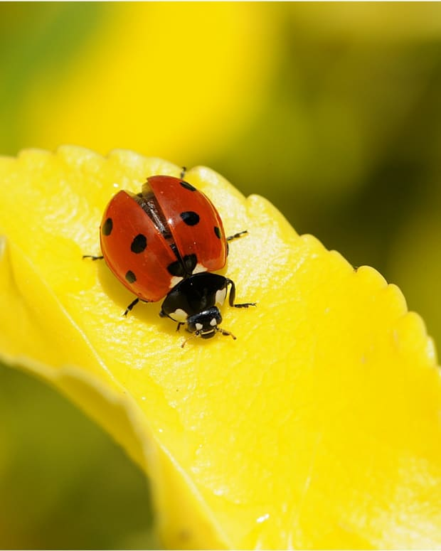 macro-photography-tips-out-in-the-field