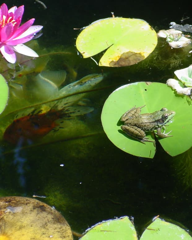 how-to-make-your-own-a-backyard-pond