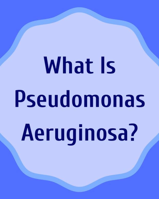pseudomonas-infection-symptoms-treatment-self-help