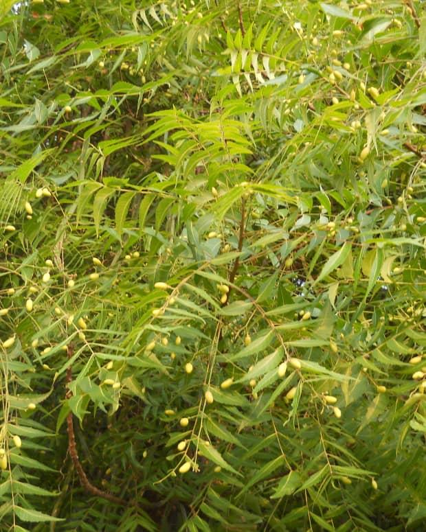 neem-oil-organic-pesticide
