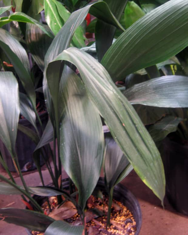 12-houseplants-for-low-light-conditions