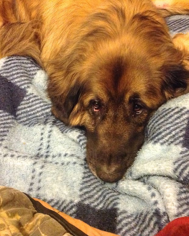 intestinal-blockage-and-surgery-in-dogs-facts-and-prevention