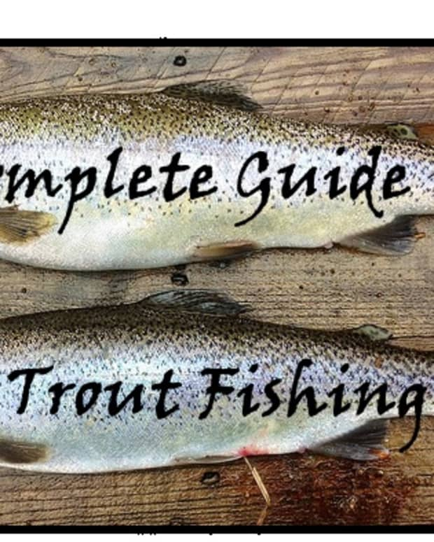 a-complete-guide-to-fishing-for-trout