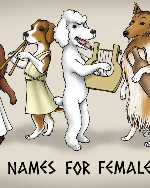 15-female-greek-names-that-make-cool-dog-names
