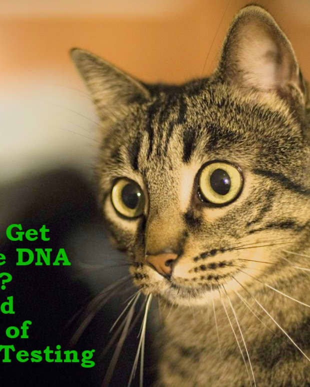 should-i-get-at-home-genetic-testing