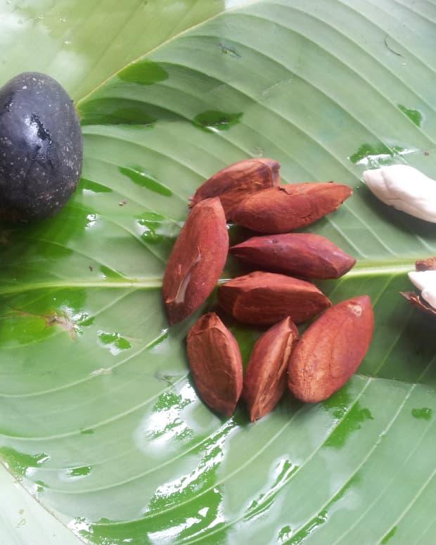 galip-nut-canarium-indicum-nutritional-nut